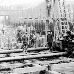 Dense base of timber piles